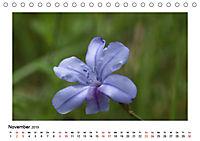 Un-Kraut (Tischkalender 2019 DIN A5 quer) - Produktdetailbild 11