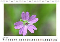 Un-Kraut (Tischkalender 2019 DIN A5 quer) - Produktdetailbild 4