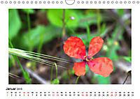 Un-Kraut (Wandkalender 2019 DIN A4 quer) - Produktdetailbild 1