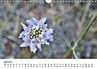 Un-Kraut (Wandkalender 2019 DIN A4 quer) - Produktdetailbild 7