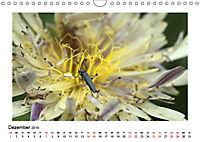 Un-Kraut (Wandkalender 2019 DIN A4 quer) - Produktdetailbild 12