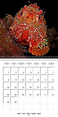 UNDERWATER CREATURES (Wall Calendar 2019 300 × 300 mm Square) - Produktdetailbild 4