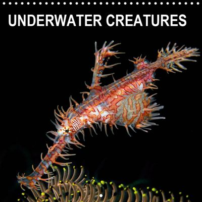 UNDERWATER CREATURES (Wall Calendar 2019 300 × 300 mm Square), Henry Jager