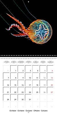 UNDERWATER CREATURES (Wall Calendar 2019 300 × 300 mm Square) - Produktdetailbild 10