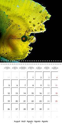 UNDERWATER CREATURES (Wall Calendar 2019 300 × 300 mm Square) - Produktdetailbild 8