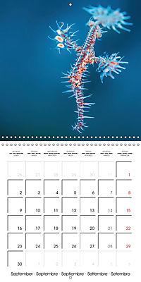 UNDERWATER CREATURES (Wall Calendar 2019 300 × 300 mm Square) - Produktdetailbild 9