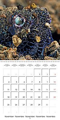 UNDERWATER CREATURES (Wall Calendar 2019 300 × 300 mm Square) - Produktdetailbild 11