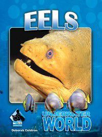 Underwater World Set 1: Eels, Deborah Coldiron
