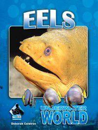 Underwater World Set 1: Eels, Deborah Coldiron