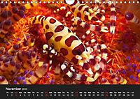 Unique Creatures of the Under Water World (Wall Calendar 2019 DIN A4 Landscape) - Produktdetailbild 11