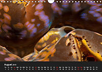 Unique Creatures of the Under Water World (Wall Calendar 2019 DIN A4 Landscape) - Produktdetailbild 8