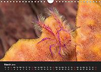 Unique Creatures of the Under Water World (Wall Calendar 2019 DIN A4 Landscape) - Produktdetailbild 3