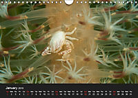 Unique Creatures of the Under Water World (Wall Calendar 2019 DIN A4 Landscape) - Produktdetailbild 1