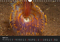 Unique Creatures of the Under Water World (Wall Calendar 2019 DIN A4 Landscape) - Produktdetailbild 4