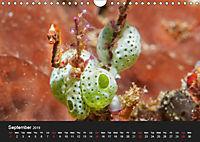 Unique Creatures of the Under Water World (Wall Calendar 2019 DIN A4 Landscape) - Produktdetailbild 9