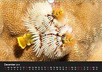 Unique Creatures of the Under Water World (Wall Calendar 2019 DIN A4 Landscape) - Produktdetailbild 12