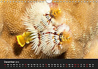 Unique Creatures of the Under Water World (Wall Calendar 2019 DIN A4 Landscape) - Produktdetailbild 12