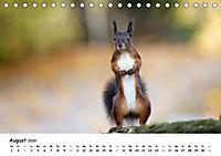 Unsere Eichhörnchen in Bayern (Tischkalender 2019 DIN A5 quer) - Produktdetailbild 8