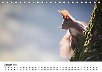 Unsere Eichhörnchen in Bayern (Tischkalender 2019 DIN A5 quer) - Produktdetailbild 1