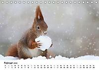 Unsere Eichhörnchen in Bayern (Tischkalender 2019 DIN A5 quer) - Produktdetailbild 2