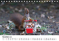 Unsere Eichhörnchen in Bayern (Tischkalender 2019 DIN A5 quer) - Produktdetailbild 11