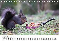 Unsere Eichhörnchen in Bayern (Tischkalender 2019 DIN A5 quer) - Produktdetailbild 9