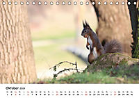 Unsere Eichhörnchen in Bayern (Tischkalender 2019 DIN A5 quer) - Produktdetailbild 10