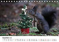 Unsere Eichhörnchen in Bayern (Tischkalender 2019 DIN A5 quer) - Produktdetailbild 12