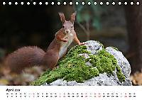 Unsere Eichhörnchen in Bayern (Tischkalender 2019 DIN A5 quer) - Produktdetailbild 4