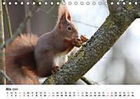 Unsere Eichhörnchen in Bayern (Tischkalender 2019 DIN A5 quer) - Produktdetailbild 5