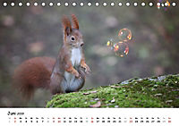 Unsere Eichhörnchen in Bayern (Tischkalender 2019 DIN A5 quer) - Produktdetailbild 6