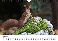 Unsere Eichhörnchen in Bayern (Wandkalender 2019 DIN A4 quer) - Produktdetailbild 4