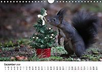 Unsere Eichhörnchen in Bayern (Wandkalender 2019 DIN A4 quer) - Produktdetailbild 12