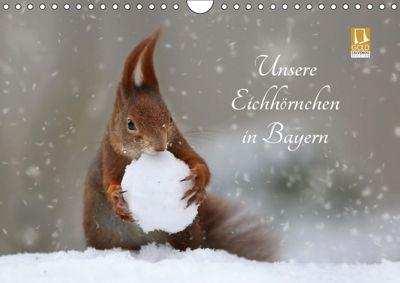 Unsere Eichhörnchen in Bayern (Wandkalender 2019 DIN A4 quer), Birgit Cerny
