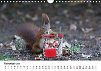 Unsere Eichhörnchen in Bayern (Wandkalender 2019 DIN A4 quer) - Produktdetailbild 11
