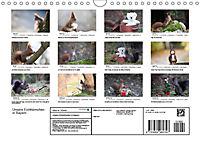 Unsere Eichhörnchen in Bayern (Wandkalender 2019 DIN A4 quer) - Produktdetailbild 13