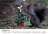 Unsere Eichhörnchen in Bayern (Wandkalender 2019 DIN A3 quer) - Produktdetailbild 12
