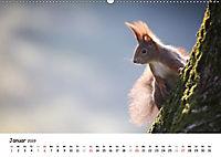 Unsere Eichhörnchen in Bayern (Wandkalender 2019 DIN A2 quer) - Produktdetailbild 1