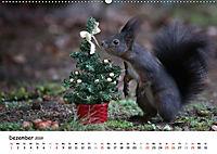 Unsere Eichhörnchen in Bayern (Wandkalender 2019 DIN A2 quer) - Produktdetailbild 12