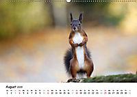 Unsere Eichhörnchen in Bayern (Wandkalender 2019 DIN A2 quer) - Produktdetailbild 8