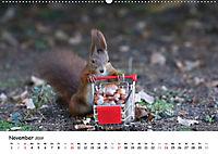 Unsere Eichhörnchen in Bayern (Wandkalender 2019 DIN A2 quer) - Produktdetailbild 11