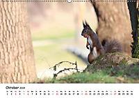 Unsere Eichhörnchen in Bayern (Wandkalender 2019 DIN A2 quer) - Produktdetailbild 10