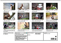 Unsere Eichhörnchen in Bayern (Wandkalender 2019 DIN A2 quer) - Produktdetailbild 13