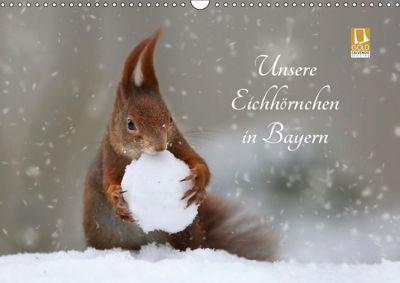 Unsere Eichhörnchen in Bayern (Wandkalender 2019 DIN A3 quer), Birgit Cerny