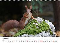 Unsere Eichhörnchen in Bayern (Wandkalender 2019 DIN A3 quer) - Produktdetailbild 4