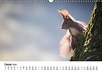 Unsere Eichhörnchen in Bayern (Wandkalender 2019 DIN A3 quer) - Produktdetailbild 1