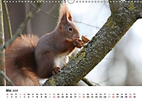 Unsere Eichhörnchen in Bayern (Wandkalender 2019 DIN A3 quer) - Produktdetailbild 5