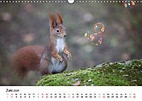 Unsere Eichhörnchen in Bayern (Wandkalender 2019 DIN A3 quer) - Produktdetailbild 6