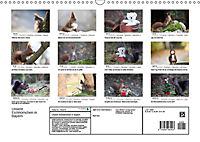 Unsere Eichhörnchen in Bayern (Wandkalender 2019 DIN A3 quer) - Produktdetailbild 13