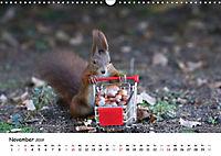 Unsere Eichhörnchen in Bayern (Wandkalender 2019 DIN A3 quer) - Produktdetailbild 11
